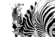 BℓACK AND WHITE / Black and white - my first love