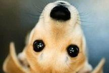 hound dogs. / For hound lovers. Follow Diggythehound on Instagram.