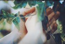 Gardening and Yardening / by Amy Webb .