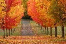 Fall / by Jennifer Cole