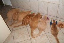 Meus Gatos/My Cats