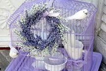 Gaiolas e Prateleiras/ Bird Cage and Shelf