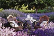 Secret Garden... / by Elaine Bello
