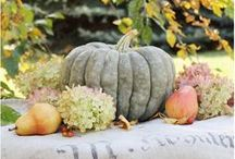 Fall's Finery / by Kristin Foster