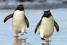 Penguins / Cute photos, crafts, and recipes that look like penguins