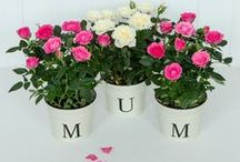 Perfect Mother's Day Ideas / Say thanks to the world's best Mum (or Mum-type-person) this Mother's Day!