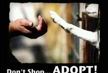 Rescue Pets / So many pets need a good home. Why not consider fostering or adoption? There are endless benefits to adding a fur baby to your family, the primary of which is unconditional love.