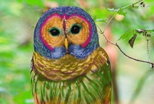 Owls / by Patricia Edsall Hartley
