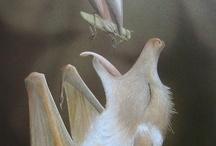 Bats: Teaching / by Jane Reid