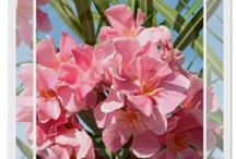 My Zazzle - beautiful nature / Flowers, landscapes