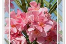 My Zazzle - beautiful nature / Flowers, landscapes