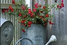 ~ Antique Garden ~