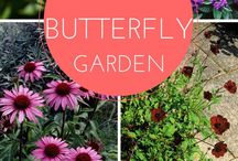 Butterfly Garden / Planted for butterflies  / by Tina Carothers