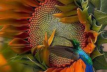 variety of flowers / by Maria Cristina Henao