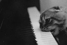 Feline/Canine / by Shannon Jenkins