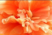 Shades of Orange + Peach