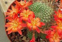 cactus / by Maria Cristina Henao
