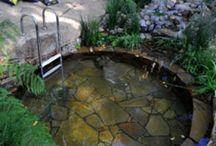 Garden- Swimmin' Hole / by Allison Bell