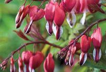 Garden- Plant Profiles / by Allison Bell
