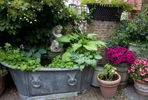 Garden- Containers / by Allison Bell