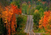 Autumn / Fall Leaves & Foliage