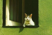 ❤Cats ・・・ by the window / by Saco Takata