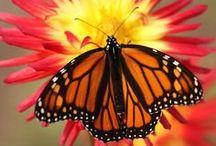 Butterflies / by Dawn Bradley