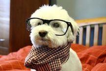 Geek Pet