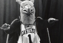 History of the Griffin / by Canisius Athletics