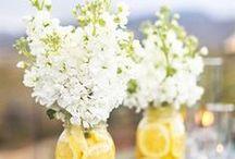 Floral Arranging: Center Pieces / by Ann Leete
