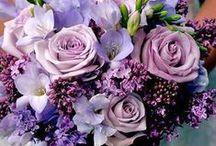 Floral Arranging: boquets / by Ann Leete