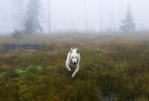 dream pet. / by Andrea Carpenter-Heffernan