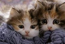 Cats and Kittens / by Cindy Smith