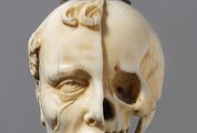 Cranium / skulls
