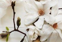 { Flores } / flowers, fleurs, blumen, fiori, flores, цветы, 花卉, フラワーズ, الزهور / by Laura Junquera