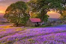 England & Scotland / by David Wright