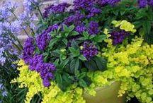 Flower Power & Gardening Tips