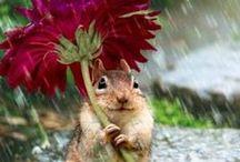 Cute & Pretty Animals
