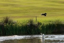 Golf Courses around the World on Mobitee App / Golf Courses found on Mobitee GPS Golf app for iPhone and Android