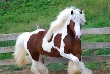 HORSE ʊ LOVER