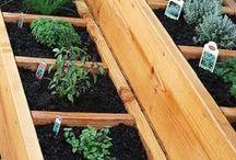 Gardening / by Deen W.