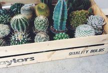 Plants / by Keri Crossley