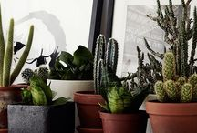 Interior: Indoor Plants / by Andie Javelosa