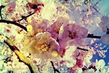 ~FLOWeRS~ / by Coryn Smith