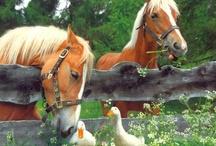country farm dreams