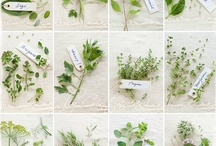 HERBS / Herbs with Personally selected products