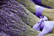 LAVANDA / Lavanda with Personally selected products