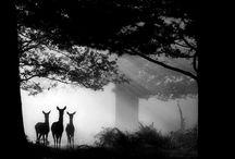 Animals.  / by Austin