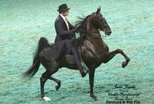American Saddlebreds  / by Leanna Mullis Wright