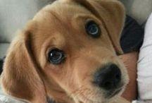 Puppy love / by Beth Sullivan